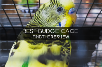 Best Budgie Cage