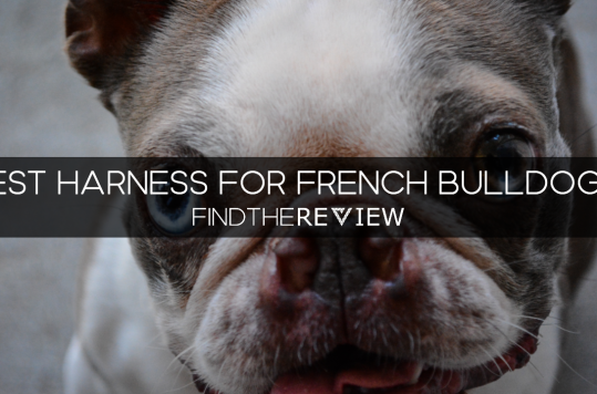 best harness for french bulldog