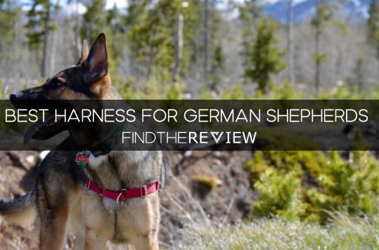 Best Harness for German Shepherds